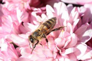 Bienenstich Mittel dagegen