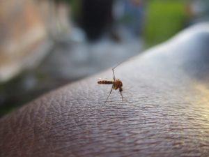 insektenstich entz ndet geschwollen tipps mittel dagegen. Black Bedroom Furniture Sets. Home Design Ideas