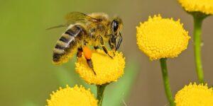 Insektenstich Hausmittel gegen Stechmücke & Co.