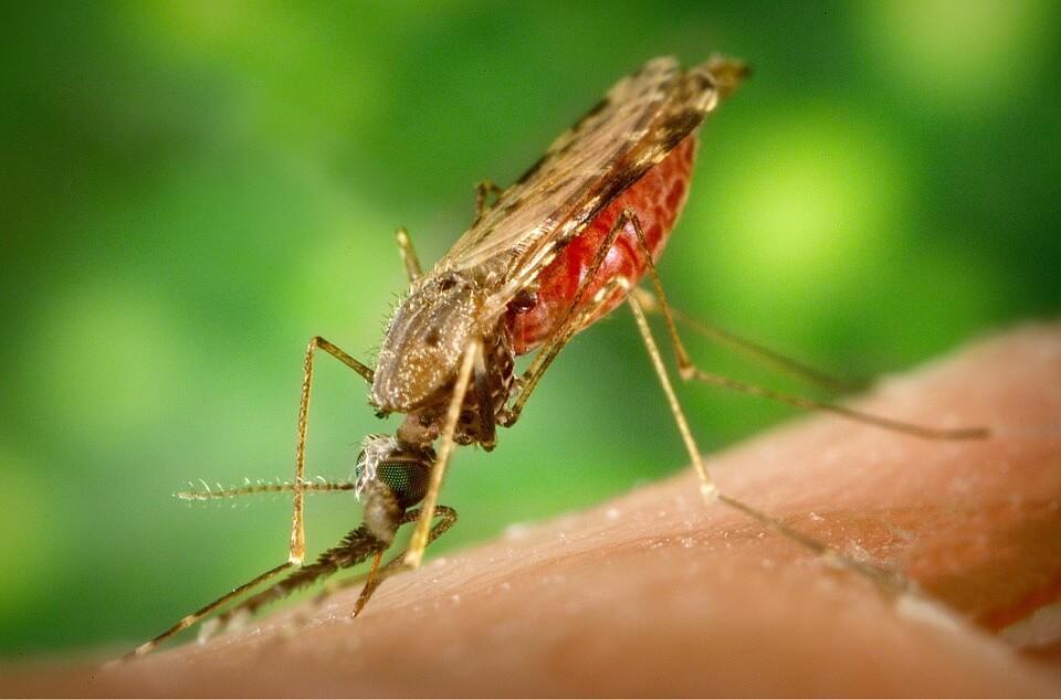 Insektenstich Entzündet - Allergie, Schwellung, Allergische Reaktion!