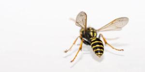 Was hilft bei Insektenstichen? Mückenstiche richtig behandeln