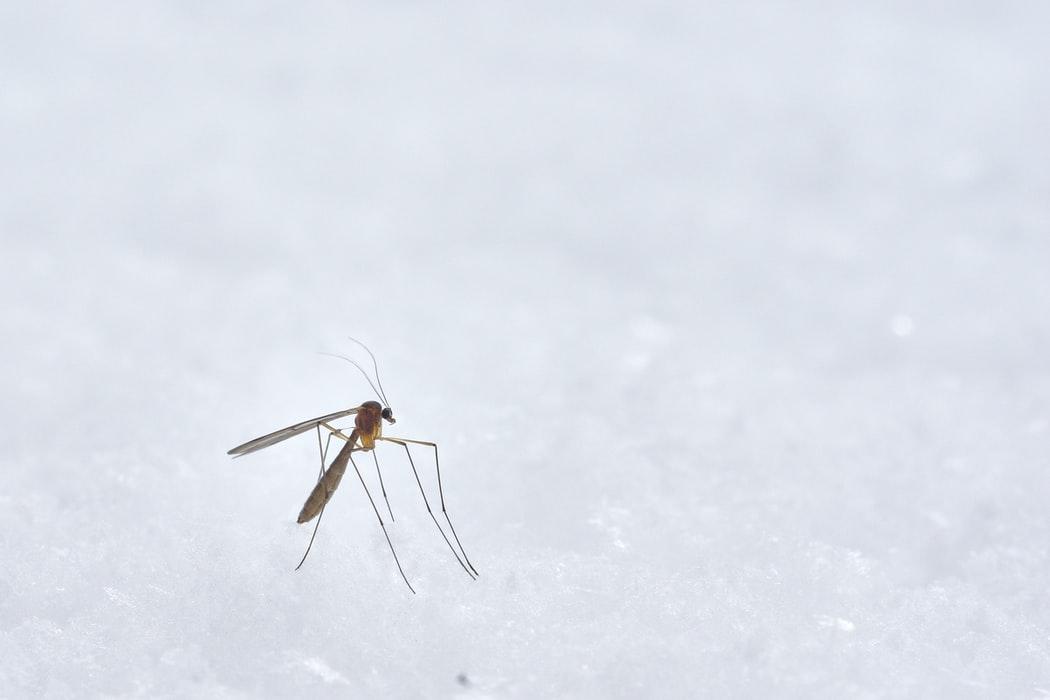 Mückenschutz auf Bali Tipp & Ratgeber