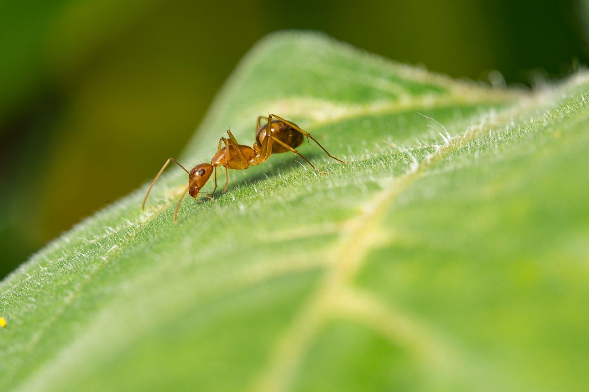 Ameisenbisse richtig behandeln