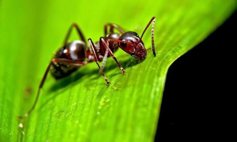 Ameisenstich behandeln Tipps