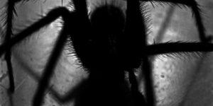 Spinnen die stechen in Deutschland Übersicht