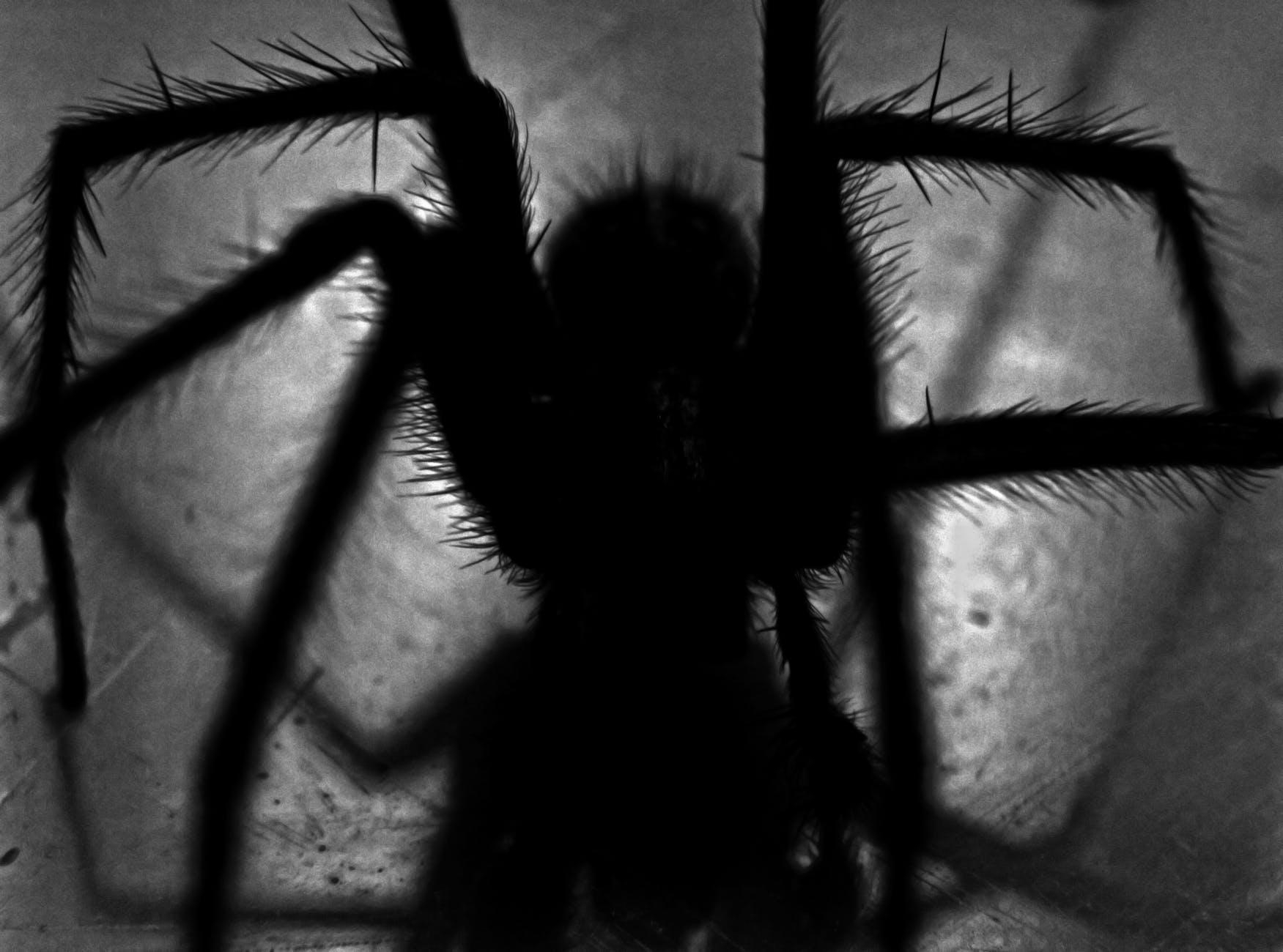 Spinnenbiss behandeln