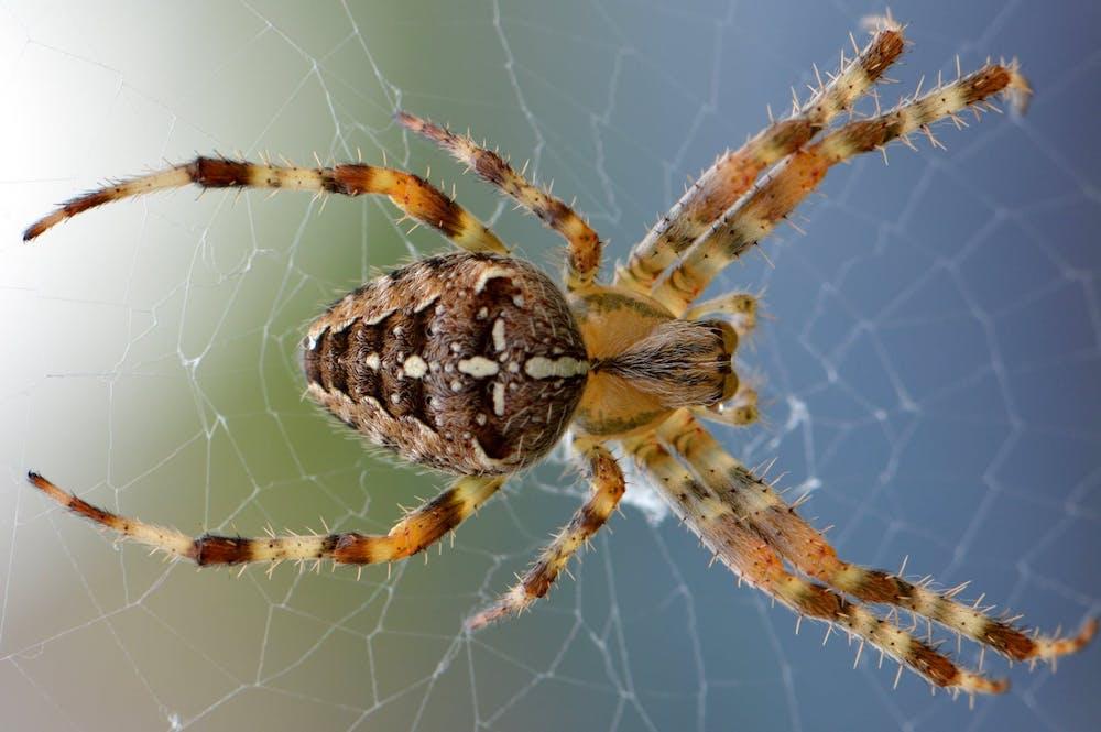 Spinnenbiss erkennen